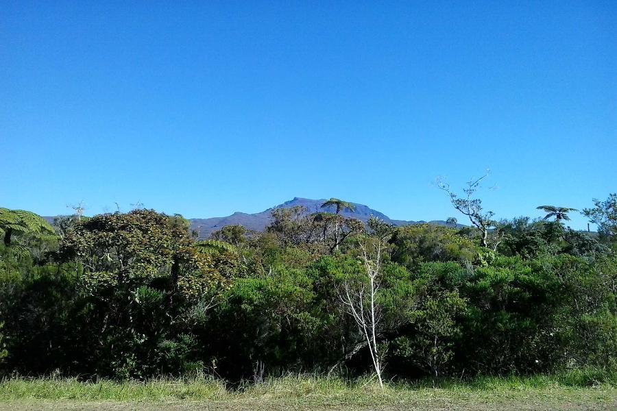 Jalouserie dann Bras-Cabot – Plaine des Palmistes