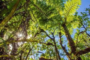 Jalouserie dann Bras-Cabot – Plaine des Palmistes @ Sentier botanique Bras-Cabot