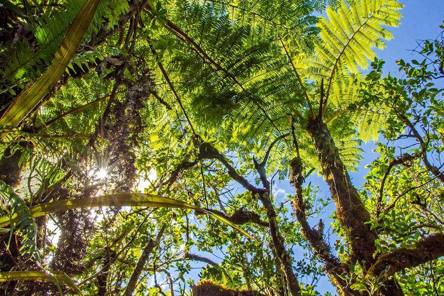 Balade spectacle plaine des palmistes
